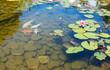 Tropical zen garden - 66319243