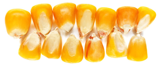 Corn seeds isolated on white