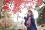 秋の公園で紅葉を眺める女性