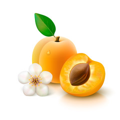 Apricot with slice on white background
