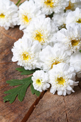 bouquet of white mini chrysanthemums close-up