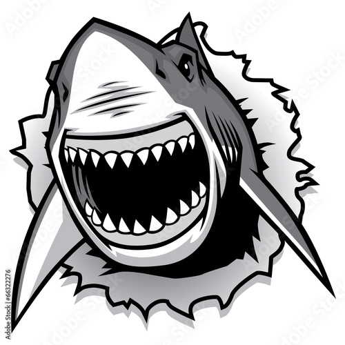 Fototapeta great white shark ripping with opened mouth