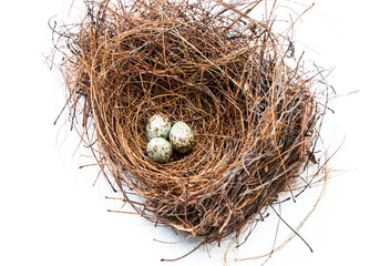 Bird nest and egg isolate