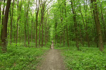 Path in spring green forest.