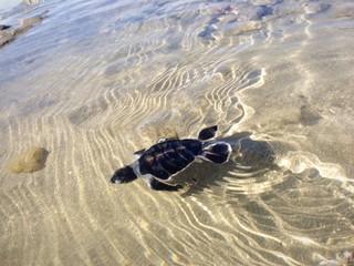 instant premier pas dans l'eau