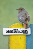 Bird perched on a fence decorated with the word ornithology poster