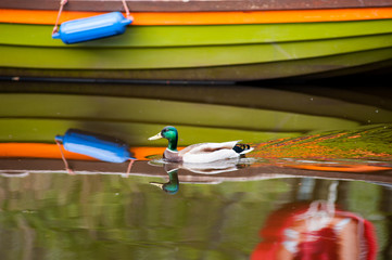 duck and boat abstract reflection
