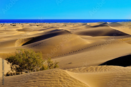 Natural Reserve of Dunes of Maspalomas, in Gran Canaria, Spain - 66331437