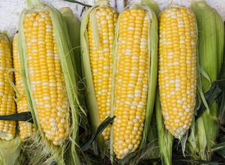 Group of fresh organic corn.