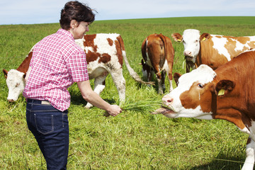 Farmer keeps cow grass to eat
