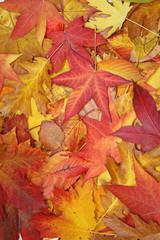 fond de feuilles mortes