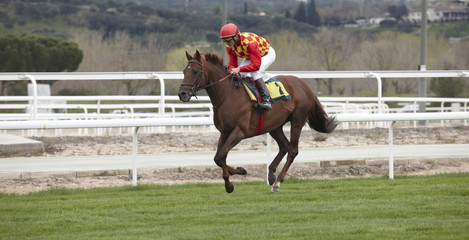 Race horse and jockey running