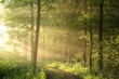 Spring deciduous forest on a foggy morning