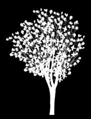 magnolia blossom tree isolated on black
