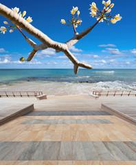promenade sur plage de rêve
