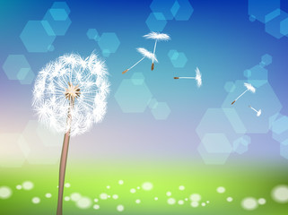 Dandelion on spring background