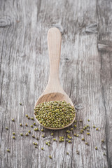 Organic mung beans on a wooden spoon