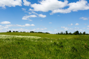 Green flowering meadow under blue sky