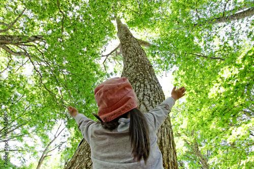Fotobehang Alpinisme ブナの木を見上げる子供