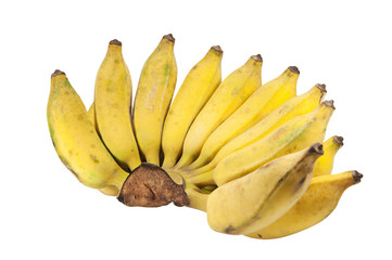 Cultivated bananas