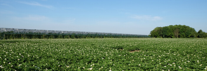 Kirsch- und Kartoffelanbau