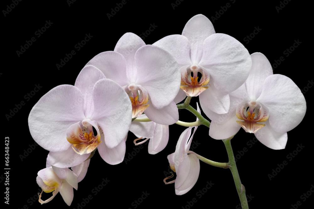 kwitnąć kwiat kwiat - powiększenie