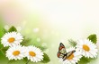 Summer background with yellow beautiful flowers and butterfly. V