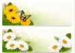 Summer banners with colorful flowers and butterfly. Vector.