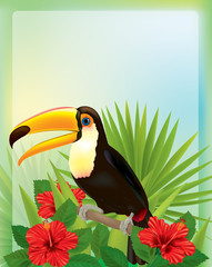 Tropical background with toucan