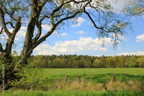 canvas print picture Sommerwiese mit Baum