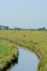 Dutch landscape with dyke and meadow