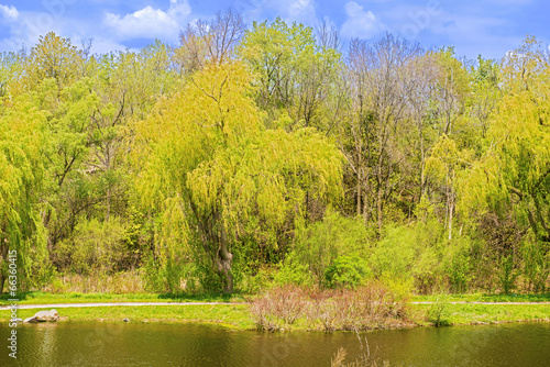 River and the trees in the park Kitchener, Ontario.