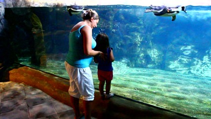 mother and daughter looking at penguin aquarium