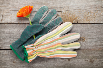 Gardening gloves and gerbera flower