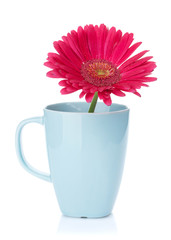 Purple gerbera flower in tea cup