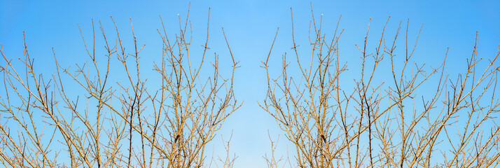 branch of Dead tree effect in blue sky background