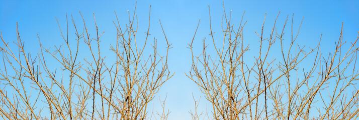 branch of Dead tree effect in blue sky background