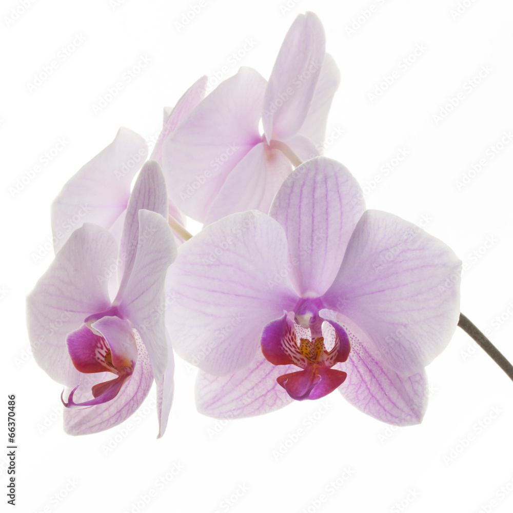 kwitnący kwiatowy kwiat - powiększenie