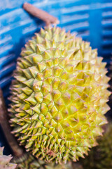 Durian fruit come from Thailand.