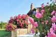 Obrazy na płótnie, fototapety, zdjęcia, fotoobrazy drukowane : rosier en bordure de maison