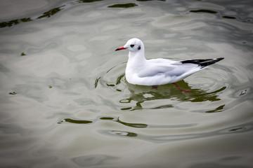 seagulls birds