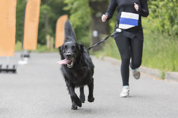 Running event with dogs