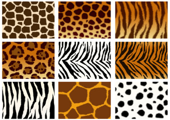 Collection of animals skins textures