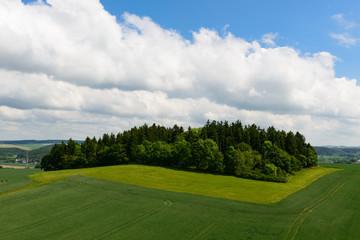 Wäldchen auf einem Hügel zwischen Feldern