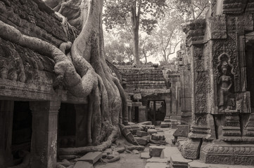 The temple of Ta Prohm in Siem Reap