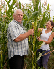 couple picking corn ears