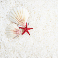 Shells and sea star composition