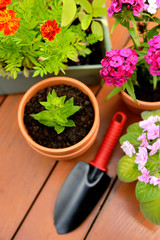 Flower pots and shovel pot in green garden