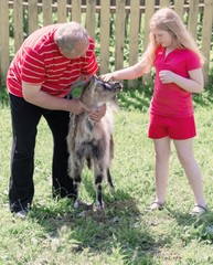 old men and girl with goat