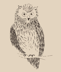 Owl vintage illustration, engraved retro style